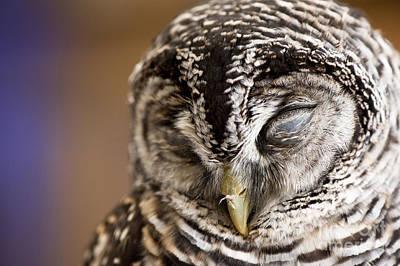 Sleepy Head Photograph - Mr Sleepyhead by Anne Gilbert