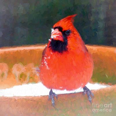 Photograph - Mr Snow Beak by Kerri Farley