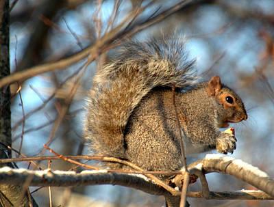 Photograph - Mr. Squirrel At Lunch by Caroline Stella