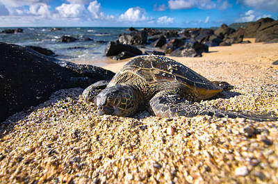 Green Sea Turtle Photograph - Turtle by Justin Matoi