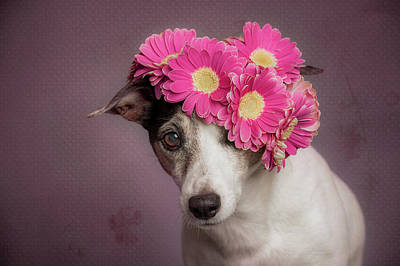 Funny Dog Wall Art - Photograph - Mrs. Spring by Heike Willers