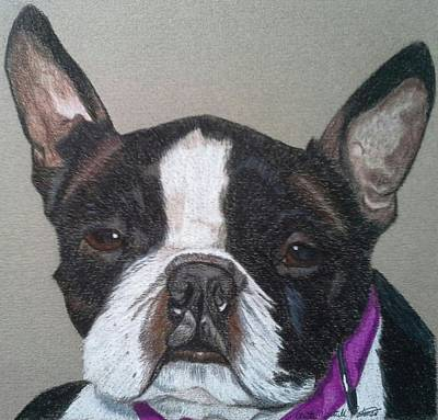 Drawing - Ms. Pugsley - Boston Terrier Commission by Anita Putman