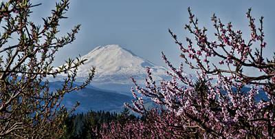 Photograph - Mt. Adams In Spring by Don Schwartz