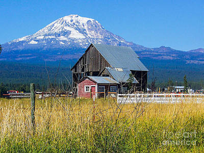 Photograph - Mt. Adams Summer by Patricia Babbitt