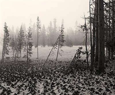 Photograph - Mt Bachelor Warm Tone by Tom Daniel