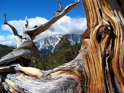 Mt. Charleston Thru A Tree Art Print
