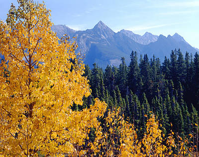 Photograph - 1m3933-mt. Colin In Fall by Ed  Cooper Photography