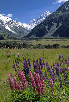 Photograph - Mt Cook National Park New Zealand by Craig Lovell
