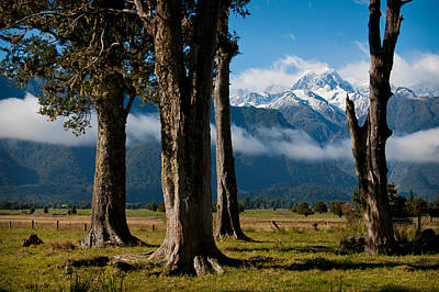 Photograph - Mt Cook Through Trees by Jenny Setchell