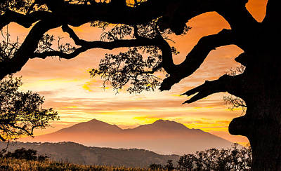 Mt Diablo Framed By An Oak Tree Print by Marc Crumpler