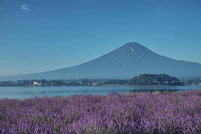 Photograph - Mt. Fuji And Lavender Blossoms by Yuga Kurita