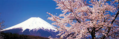Cherry Blossoms Photograph - Mt Fuji Cherry Blossoms Yamanashi Japan by Panoramic Images