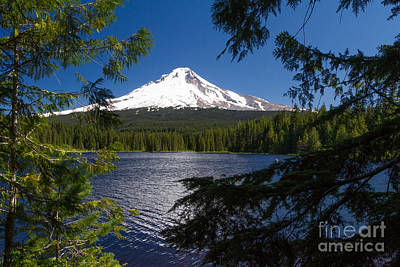 Mt. Hood And Lake Trillum 1 Original by Dan Hartford