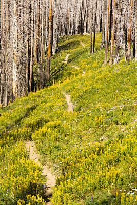 Photograph - Mt Hood Impressionism by Kunal Mehra