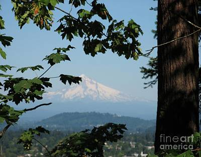 Photograph - Mt Hood by Marlene Rose Besso