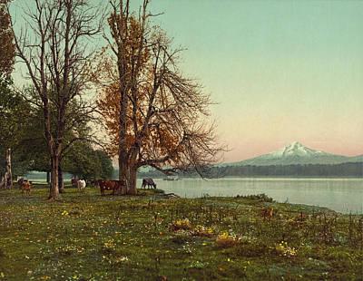 Cattle Digital Art - Mt. Hood Oregon by Gary Grayson