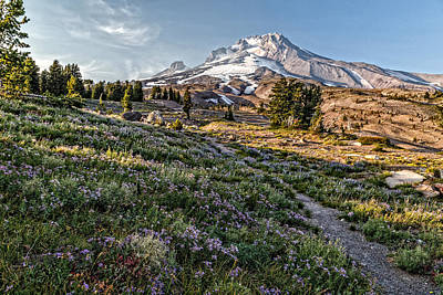 Photograph - Mt Hood Summertime by Wes and Dotty Weber