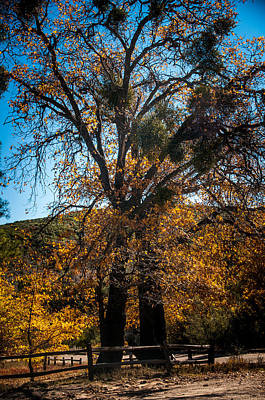 Photograph - Mt Laguna by Mickey Clausen