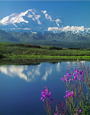 Photograph - 1m1311-mt. Mckinley Reflect And Fireweed  by Ed  Cooper Photography