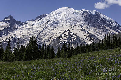 Photograph - Mt Rainier From Sunrise by Sharon Seaward