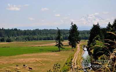 Pacific Northwest Photograph - Mt. Rainier  by Tanya  Searcy