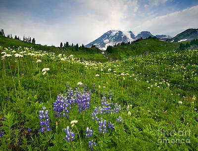Mt Rainier Wall Art - Photograph - Mt. Rainier Wildflower Profusion by Mike  Dawson