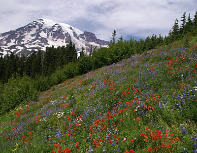 Photograph - Mt Ranier Wildflowers 2 by Robert Lozen