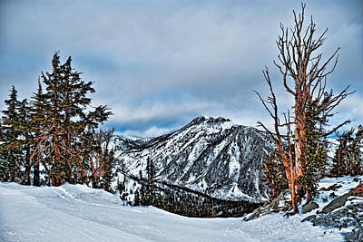 Mt. Rose Art Print by Maria Coulson