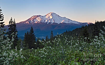 Photograph - Mt. Shasta At Dawn by Stuart Gordon