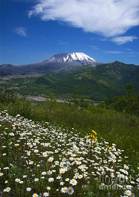 Asters Photograph - Mt. St. Helens View by Mike Dawson