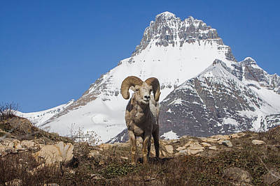 Photograph - Mt Wilbur Big Horn by Jack Bell