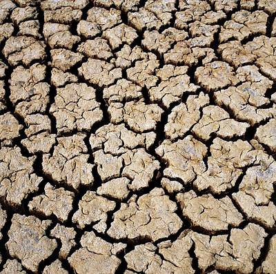 Drought Wall Art - Photograph - Mud Cracking During A Drought. by Dr Jeremy Burgess/science Photo Library
