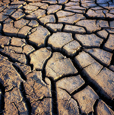 Drought Wall Art - Photograph - Mud Cracks In The Sun-baked Earth by Kaj R. Svensson/science Photo Library