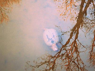 Photograph - Muddy Spring Turtle by Patricia Januszkiewicz