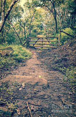 Photograph - Muddy Trail Leading To A Gate In The Jungle by Edward Fielding