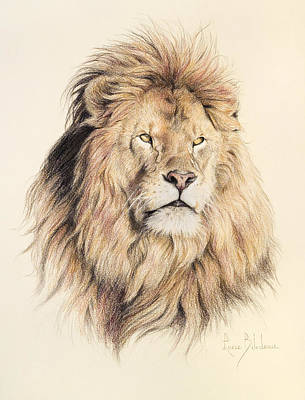 Africa Wall Art - Drawing - Mufasa by Lucie Bilodeau