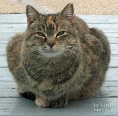 Muffin The Feral Cat Art Print