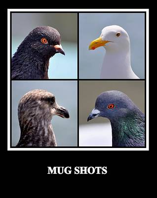 Photograph - Mug Shots by AJ  Schibig