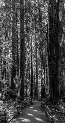 Muir Woods Giants Art Print