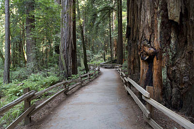 Photograph - Muir Woods National Park Service by Carol M Highsmith