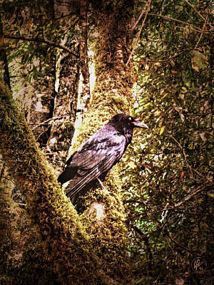 Raven Photograph - Muir Woods Raven 002 by Lance Vaughn