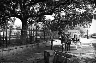 Photograph - Mule And Buggy Mono by John Rizzuto