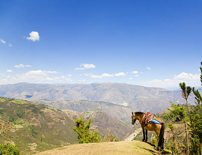 Nature Photograph - Mule And The Andes by Alexey Stiop