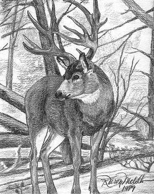 Drawing - Mule Deer Buck by Karon Melillo DeVega
