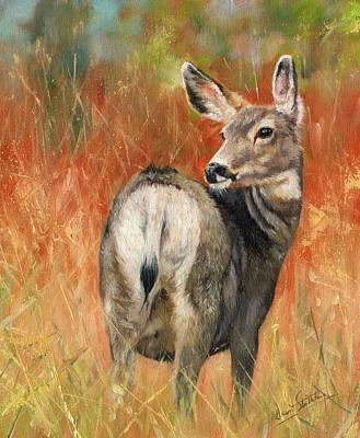 Deer Oil Painting - Mule Deer by David Stribbling
