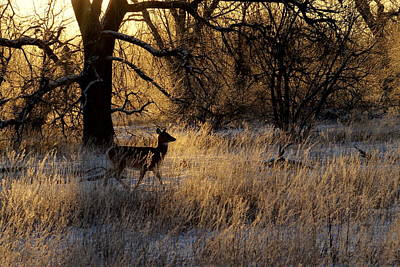 Mark Wagner Wall Art - Photograph - White Tail Doe In Morning Light. by Mark Wagner