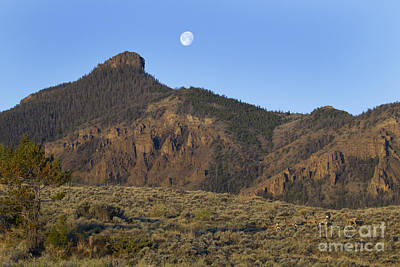 Mule Deer Herd Photograph - Mule Deer Herd  Ptarmigan Ridge  And Moon   #3705 by J L Woody Wooden