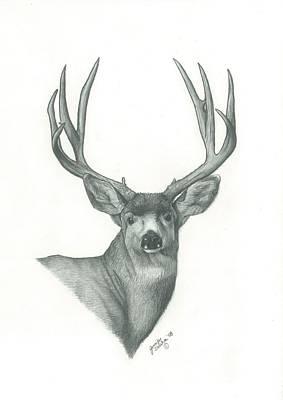 Mule Deer Drawing - Mule Deer by Jennifer Slouha