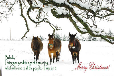Photograph - Mule Tide Christmas by Robyn Stacey