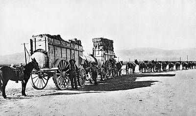 Photograph - Mule Train Hauling Cargo by Underwood Archives
